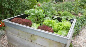DIY Ideas for an Organic Garden