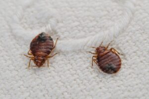 6 Alarming Signs of Bed Bugs That You Should Never Ignore