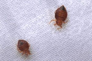How To Get Rid Of Bed Bugs For Good