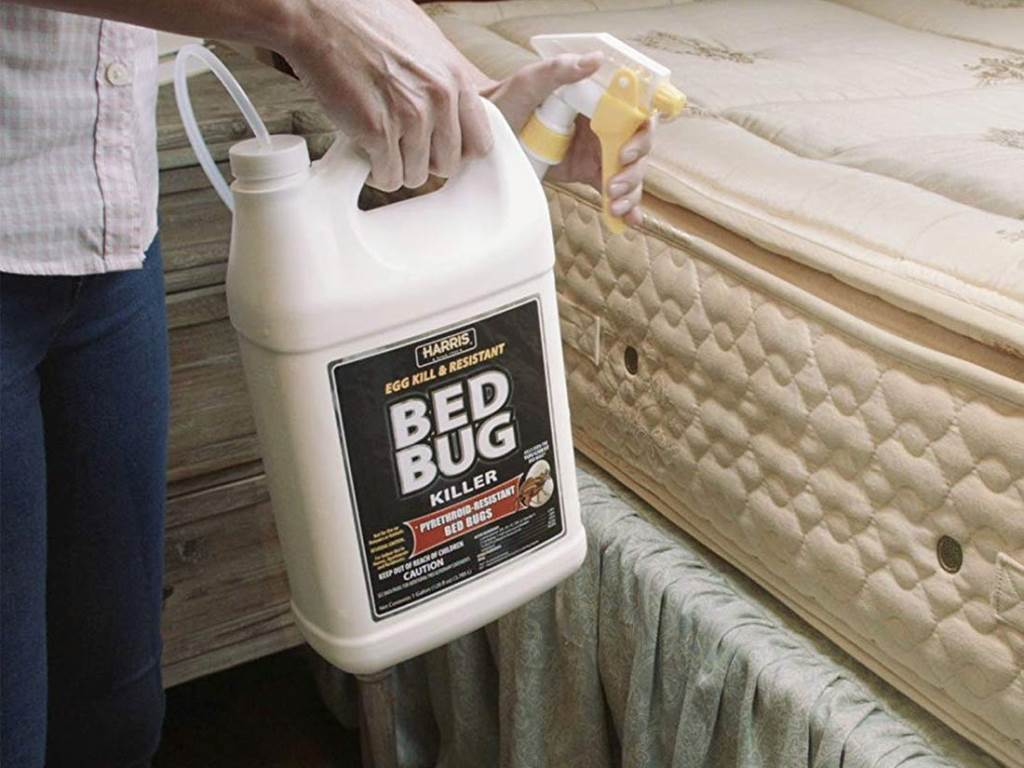 Killing Bedbug Infestation