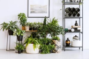 How to Spruce Up Your Home with the Right Type of Flowers and Plants