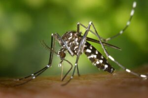 5 Sure Tips to Control Mosquitoes at Your Home