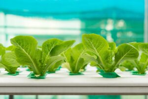 Gardening Tips: Aquaponics VS Hydroponics
