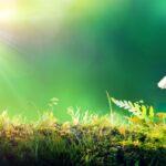 Passivhaus: The Energy-Saving Home
