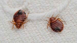 Treat and Kill Bed Bugs with the Help of an Exterminator