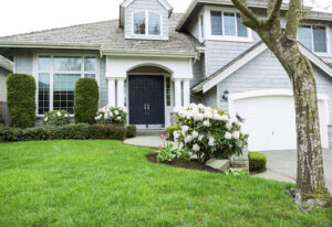 Top Tips When Choosing A Lawn Care Expert