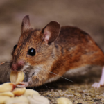 Why You Need a Regular Pest Control At Home