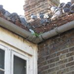 Why Stop Pigeons Nesting On Your Roof?