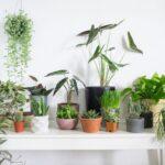 Top 6 Houseplants for Beginners