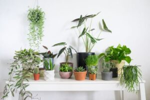 Top 6 Houseplants for Beginners