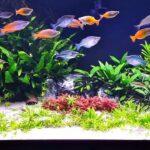Tips to Set Up Your Planted Aquarium