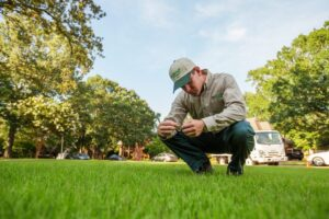 Getting Rid of Weeds in your Yard
