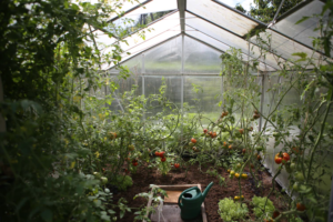 The Amazing Benefits Of Owning A Greenhouse