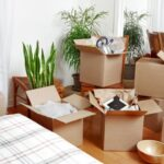 How Can San Jose Movers Help You?