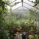 Want to Get Into Greenhouse Gardening? Here's How