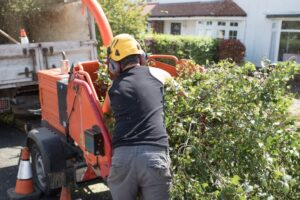 How To Save Money On Tree Service Springfield IL
