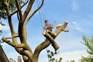 5 Signs You May Need To Call A Tree Service