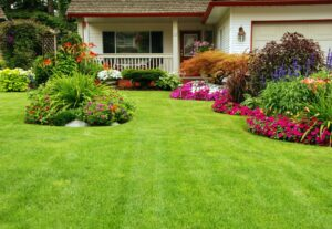 How to Get a Greener Lawn: The Important Things to Do