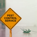 5 Signs Of A Pest Infestation In Your New Home