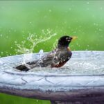 How to Attract Birds to Your Yard: 7 Tips to Know