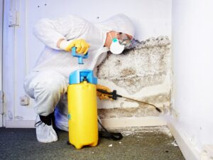 Everything You Need To Know About Keeping Your House Free Of Mold