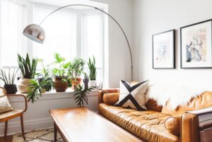 Top Tips When Livening A Room With Simple Potted Plants