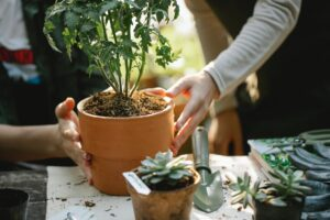 Give Your Garden A Makeover With These Eleven Tips