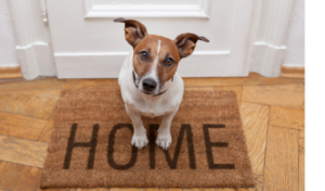 Moving with Pets: Tips To Make a Move Easy on Your Pets