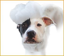 Mobile Dog Wash