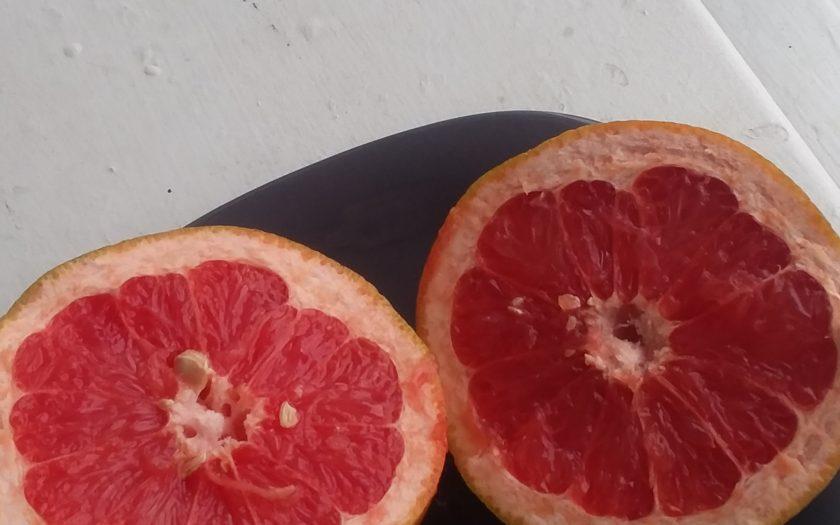 Easy Grapefruit, 1940's Style