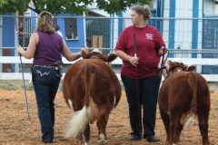 Michelle-and-Megan-showing-cow-calf-pair-class-1