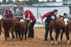 Smokey-Valley-Farms-Champ-Silver-Peaks-Farms-Res-Champ-cow-calf-pair-1