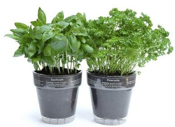 Ship live herbs