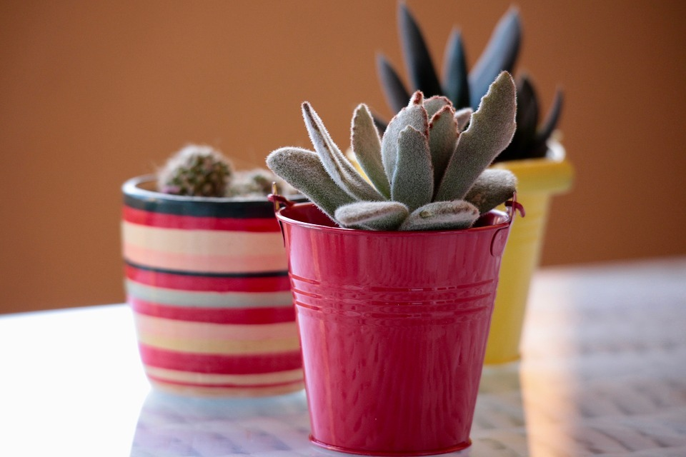 Pack and Ship Succulents and Cacti