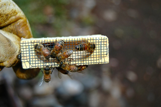 Shipping Live Bees