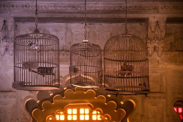 shipping a birdcage