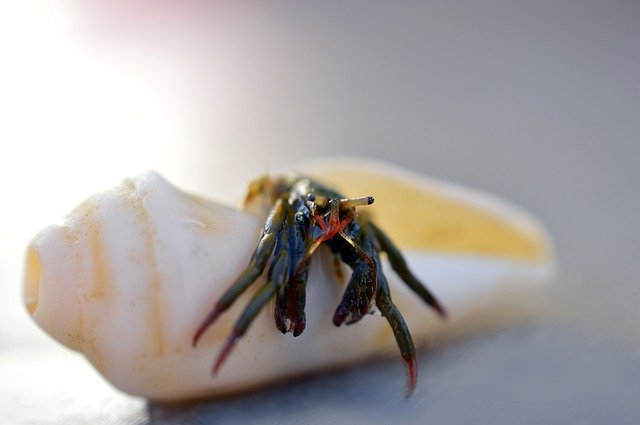 Shipping Hermit Crabs