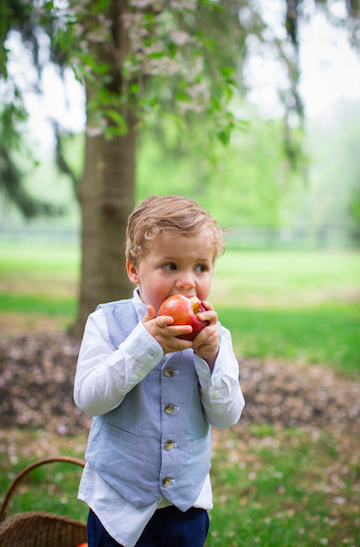nj apple picking in new jersey
