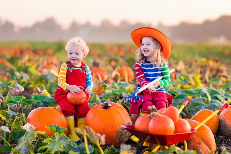 pumpkin picking nj
