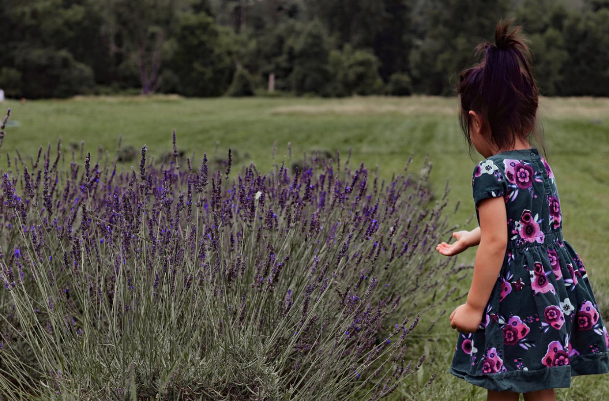 nj mom lavender farm 6 Relaxing Lavender Farms in New Jersey lavender fields nj bajajbrood