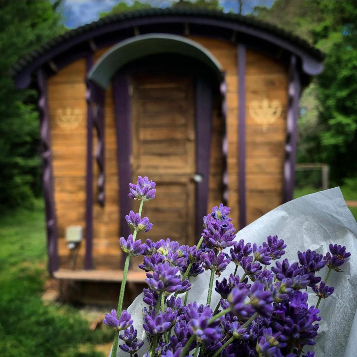 nj mom lavender farm 6 Relaxing Lavender Farms in New Jersey lavender fields nj krisdooley