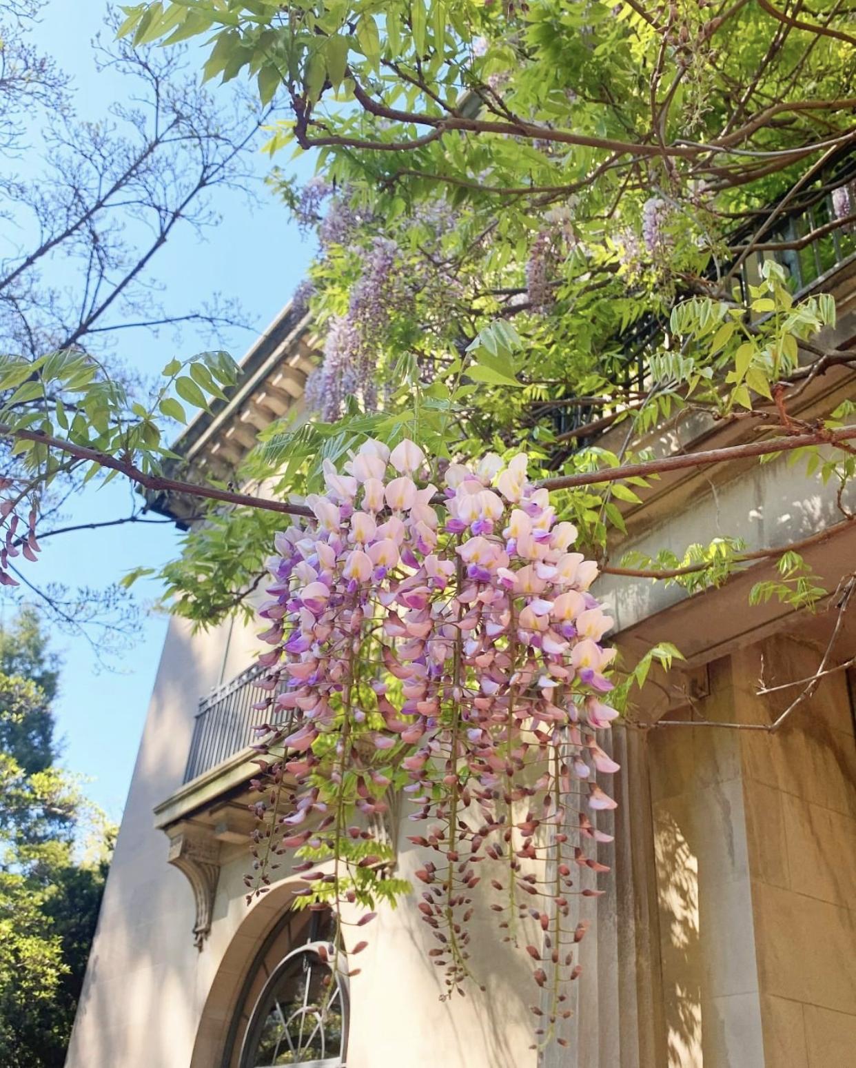 NJ gardens van vleck house and gardens