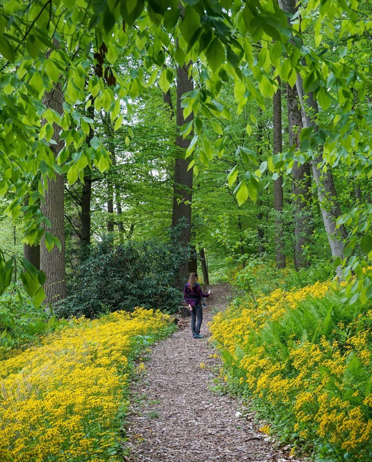 NJ gardens, cora hartshorn arbor