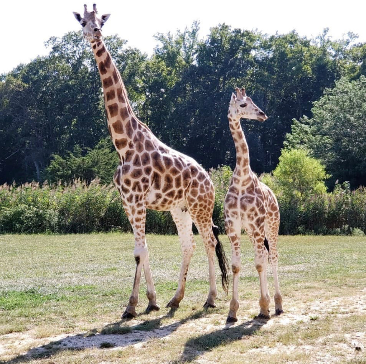 NJ Attractions, cape may county zoo indoor water park aquarium Camden zoo cape may things to do nj visiting places tourist attractions New Jersey kid attractions in nj