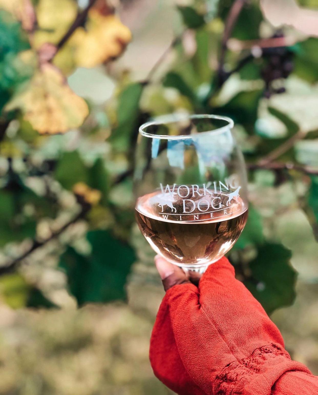 new jersey winery NJ Winery Vineyards in nj