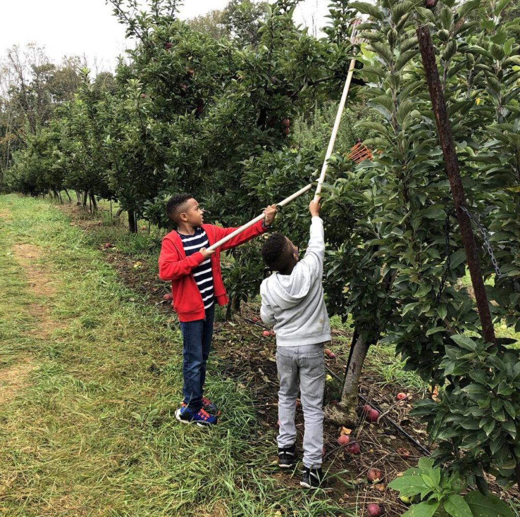nj mom apple picking in NJ season apple farm new jersey