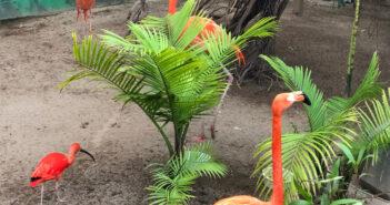 nj mom cape may county zoo new jersey flamingos