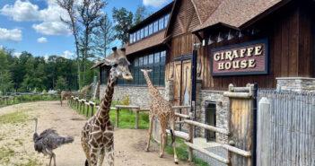 nj mom turtle back zoo west orange new jersey giraffes