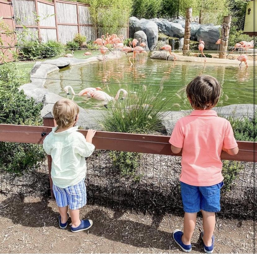 zoos in New Jersey, Turtleback Zoo