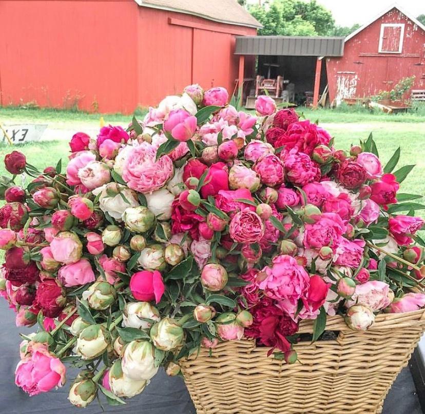 flowers in nj